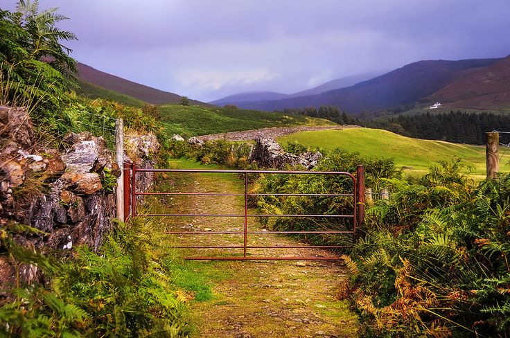 Gates On The Road. Wicklow Hills. Ireland by Jenny Rainbow