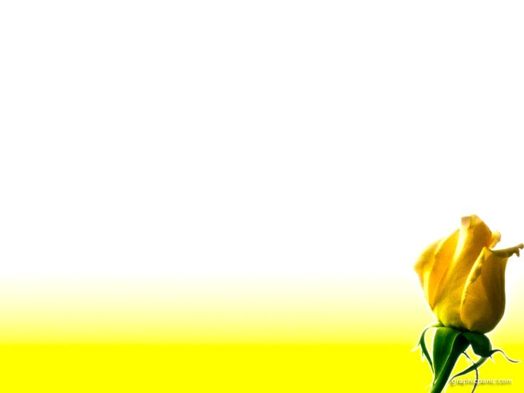 yellow rose flower powerpoint background