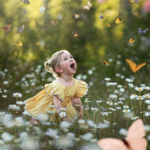 the joy of butterflies