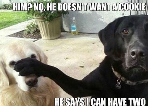 This is exactly what our Border Collie does.