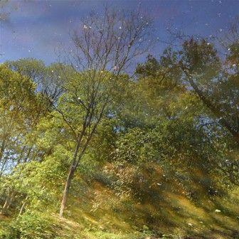 #waterspiegeling #bomen #fotografie #kunstfotografie