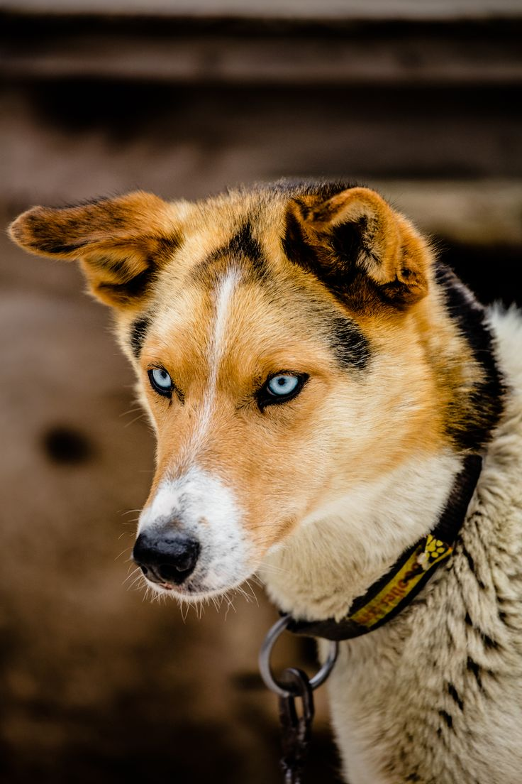 Top 25 ideas about Filson at the Iditarod® Dog Sled Race ...