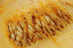 Procédés à suivre pour la récolte des semences de quelques légumes à fécondation croisée.