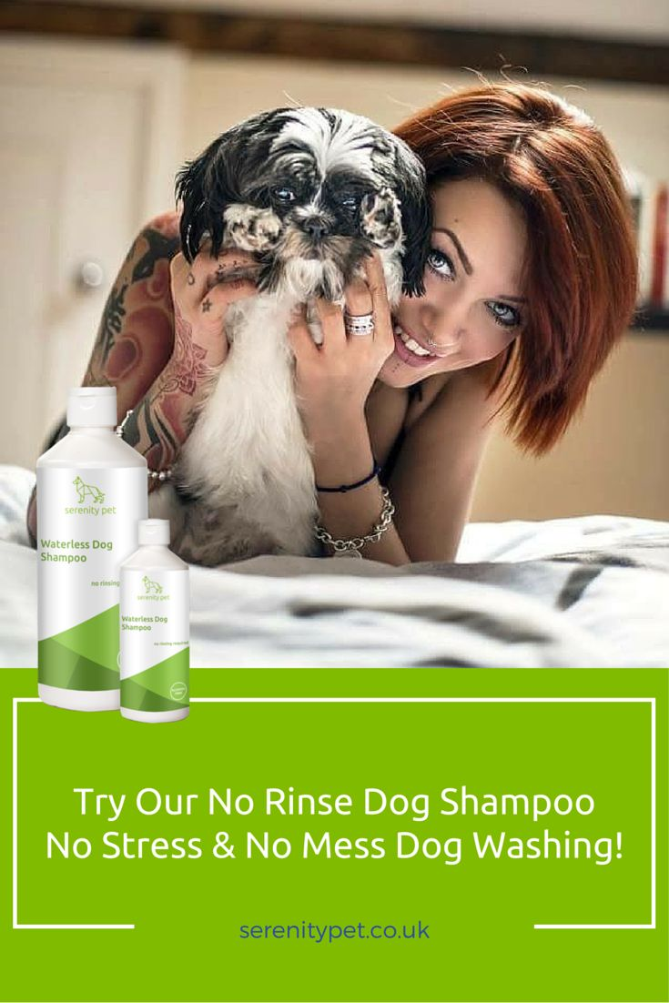 21 best no rinse dog shampoo images on pinterest dog shampoo dog serenity towel off dog shampoo is the best way to wash your mucky hound solutioingenieria Image collections