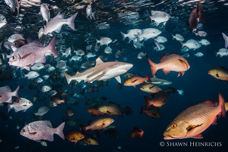 Oceana Seafood Fraud B-Roll Footage