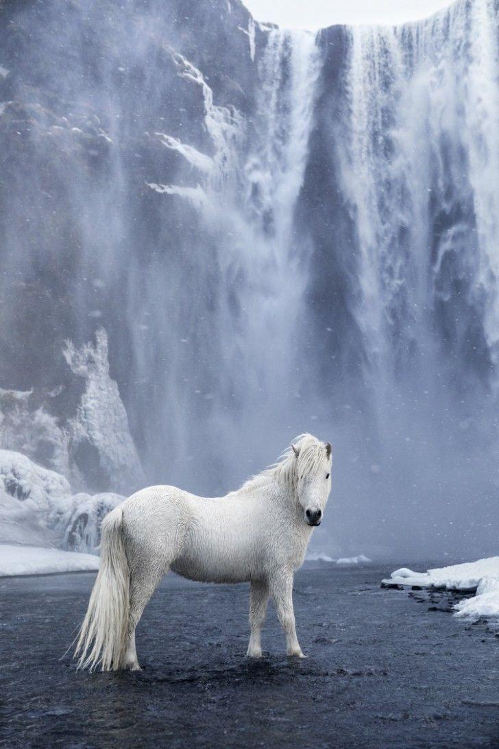 Ein Fotograf macht großartige Fotos von Pferden, die den epischen Erdrutsch betreten.