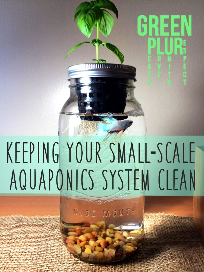 Small-scale aquaponics!