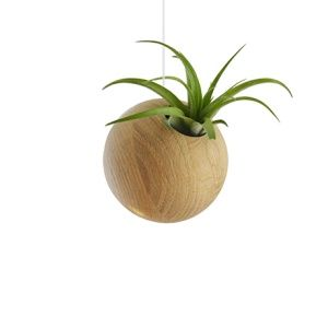 Hanging Sphere + Plant - Clear