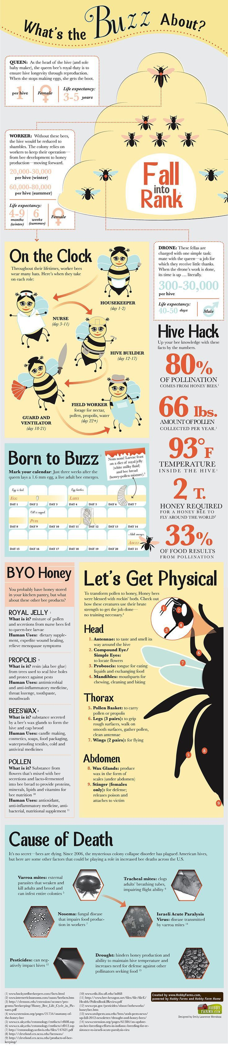 Bees! Bees! And more Bees! See what the buzz is about! #Bees101