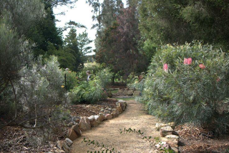 1452 best australian native gardens images on pinterest