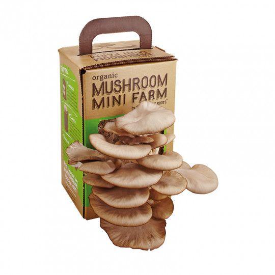 Grow a Mushroom Mini Farm | Australian Geographic Shop Online