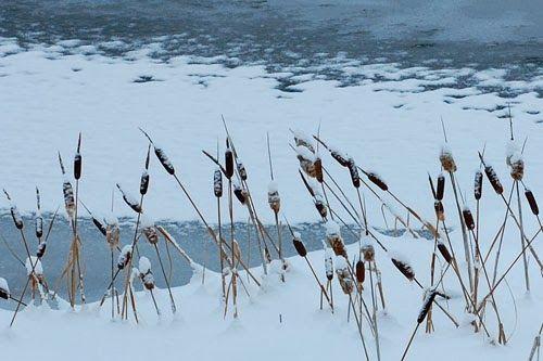 http://www.unquadratodigiardino.it/forum-di-giardinaggio/piante-acquatiche-e-palustri-laghetti-e-tinozze/25638-stagno-e-laghetto-da-giardino-con-la-neve-interesse-nei-giardini-anche-in-inverno.html