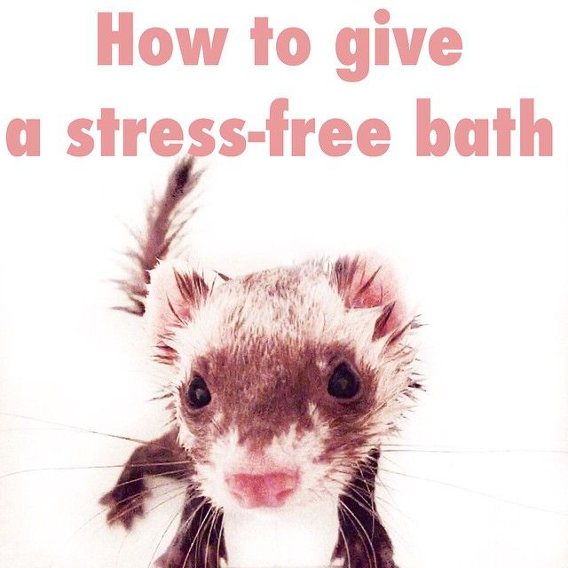 How To Give Your Pet A Stress Free Bath I Learned This