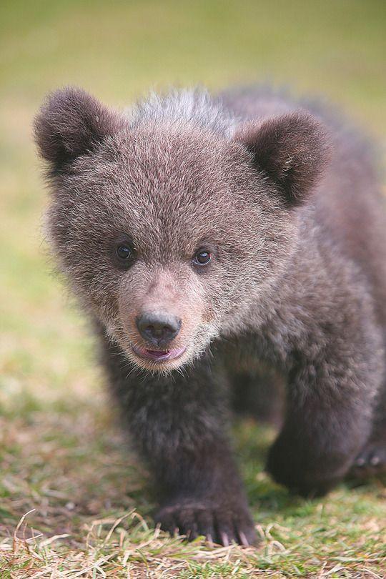 знает, красивое фото медвежонка областной