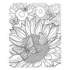 151 best Zonnebloemen images on Pinterest Sunflowers Clip art
