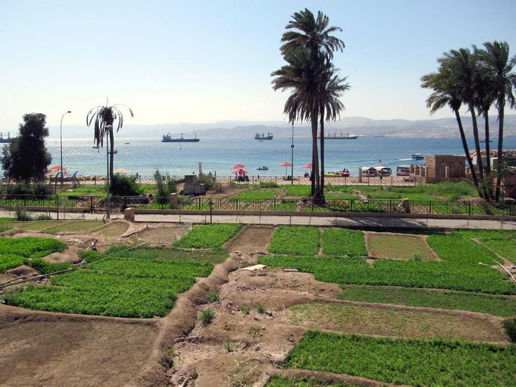 A market garden hugs the public beach at Aqaba, Jordan. The mountains in the background are in Israel (right) and Egypt (left).
