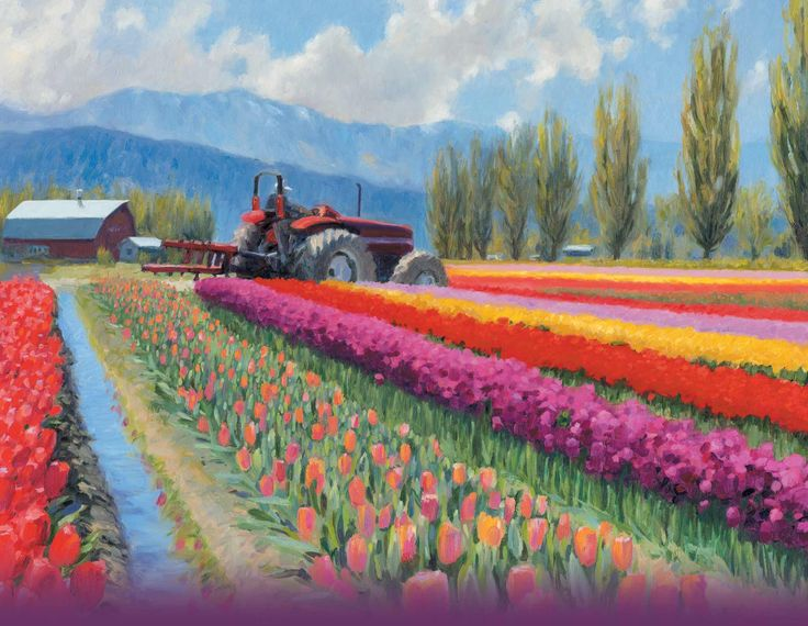 Skagit Tulip Festival Every spring hundreds of thousands of people come to enjoy the celebration of spring as millions of tulips burst into bloom. ...tulips bloom according to their own schedule sometime during the festival. Our festival is designed as a driving tour ...100s of acres of blooming flowers are scattered throughout the Skagit Valley. Many events and activities happen only during April. These too are scattered throughout the Skagit Valley. 4/1-4/30