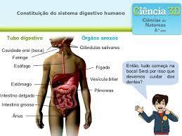 Resultado de imagen para sistema digestivo humano 3d