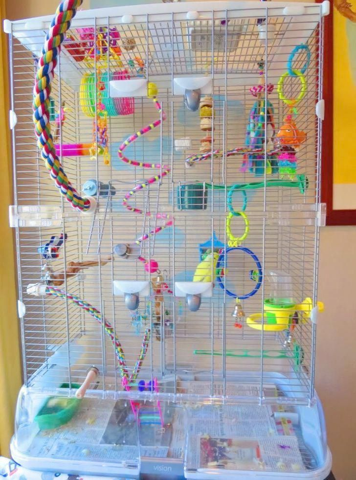 Get some -> Parakeets Mating Season #follow #parrotcageideas