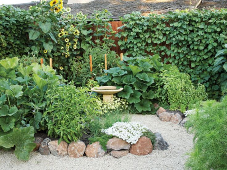 ve able garden panion planting layout