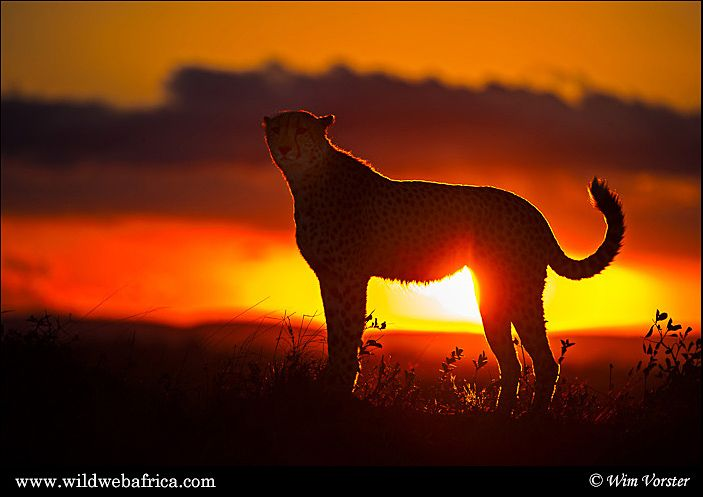 south african sunset wildlife
