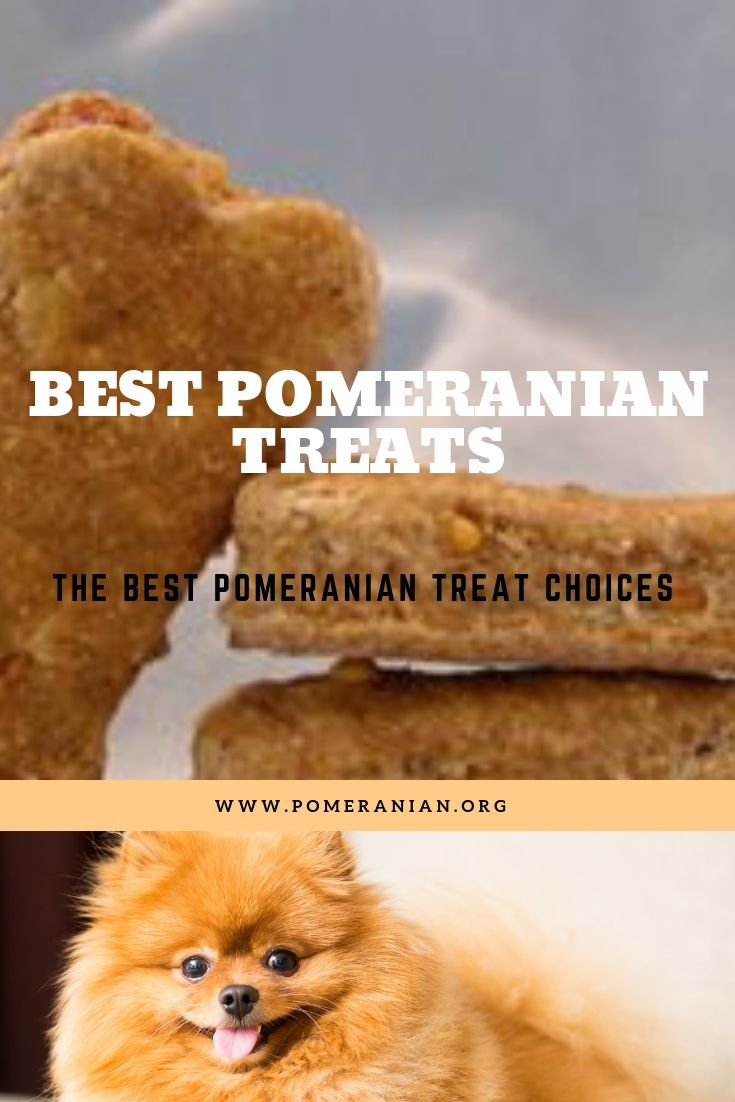 Pomeranian Pomeranians Pomeranianpuppies Pomeraniansaustralia