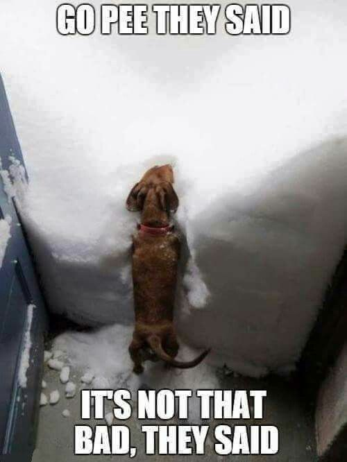 Dogs.... https://www.sunfrog.com/Pets/Dachshund-Through-The-Snow.html?71408