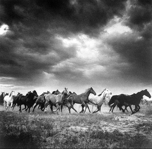 wild horses couldn't drag me away
