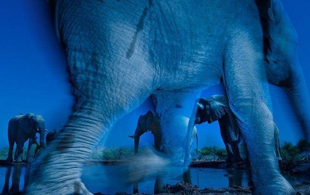 Esencia de elefantes. Por: Greg du Toit (Sudáfrica)