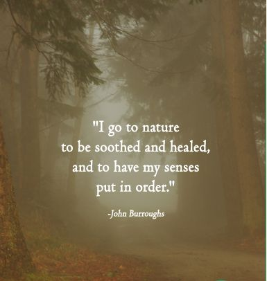 """Such a great quote. """"I go to nature to be soothed and healed, and to have my senses put in order."""" -John S. Burroughs 