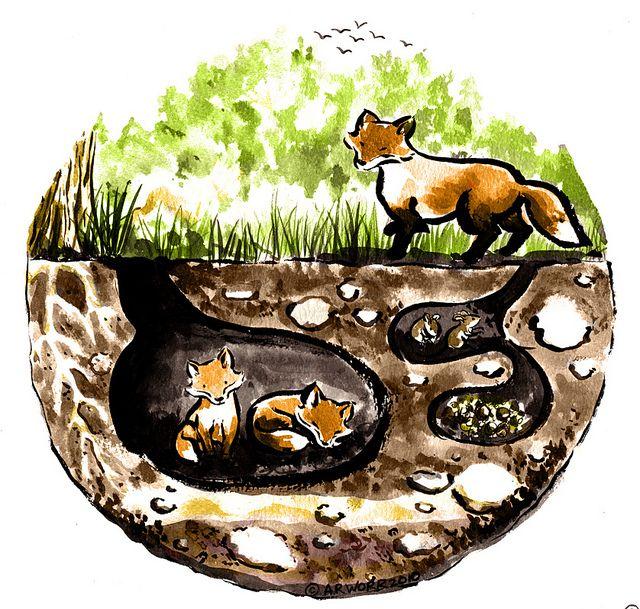 Fox Den Illustration   For Kids   Pinterest   Foxes and