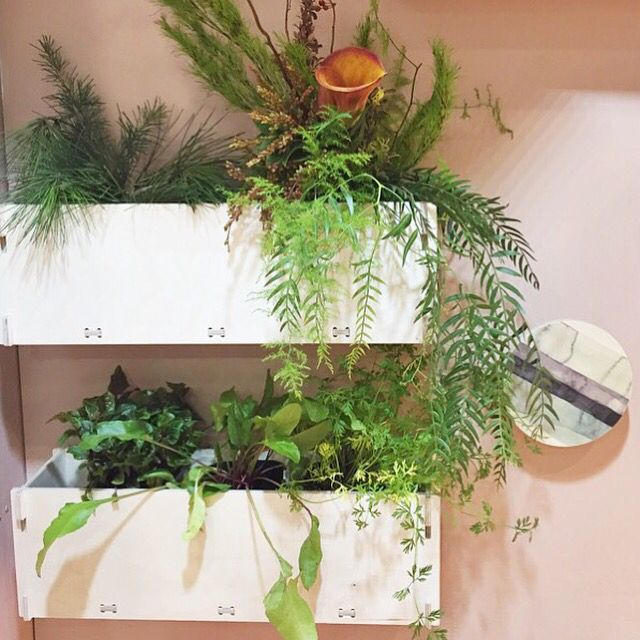 Foruu flat pack shelves as a vertical garden. From www.paperempire.com.au