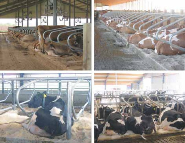 Opportunities for improved cow comfort through freestall barn renovations - Milkproduction.com