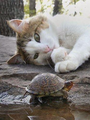 arrête de t'agiter, la tortue, tu me fatigues...