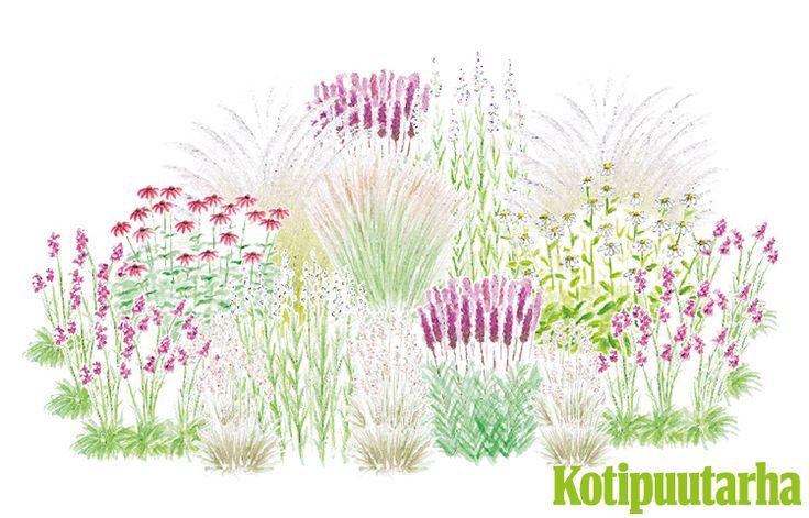 MESIJUHLAT PUUTARHAAN. Pölyttäjien suosimassa istutuksessa kasvaa koristeheiniä, luonnonkasveja ja perennoja. Kukintaa ja mettä on tarjolla alkukesästä syksyyn. Istutuksen kasvit: Punainen ja valkoinen kaunopunahattu (Echinacea purpurea), punatähkä (Liatris spicata), siniheinä (Molinia caerulea), metsälauha (Deschampsia flexuosa), koristekastikka (Calamagrostis x acutiflora), valkoinen maitohorsma (Epilobium angustifolium), mäkitervakko (Viscaria vulgaris), kellopeippi (Physostegia…