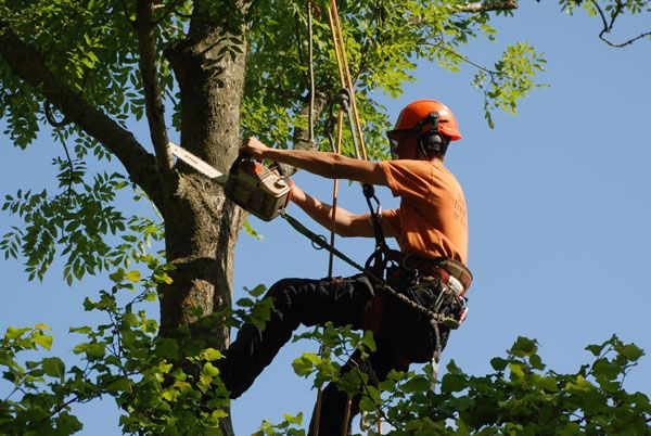 #Tree #Surgeons---#Experts At All #Types Of #Tree-#Care #Work!