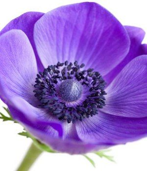 Purple Flower Names.. all the purple flowers and their bloom times.. @Donna Lucius