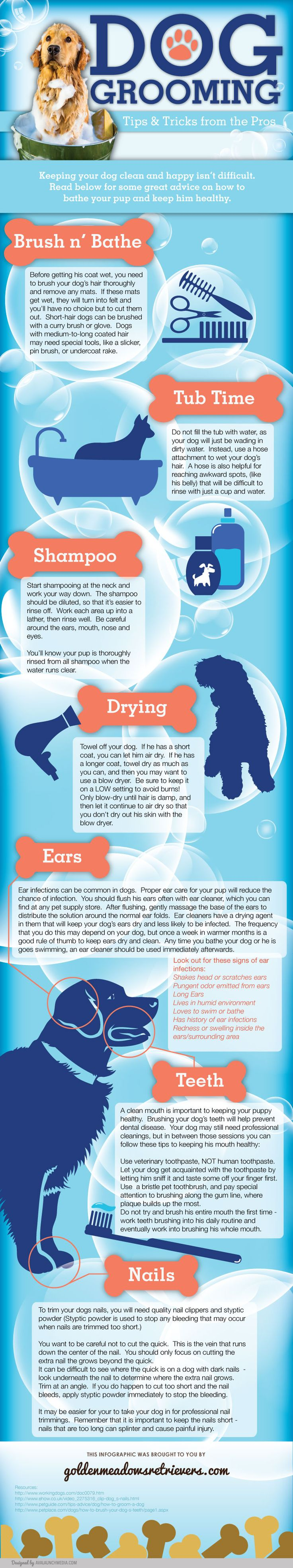 Dog Bathing Tips Tricks Tips and Tricks from the Pros for