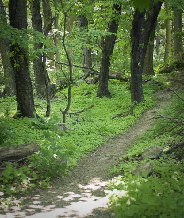 Shady trails at Eramosa Karst Conservation Area near Hamilton, Ontario