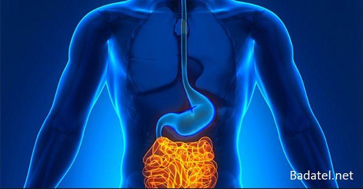 Trápia vás črevné ochorenia, únava či vyčerpanosť? Možno máte črevá odpadovými látkami. Jedením tejto potraviny si ich za 3 dni prečistíte.