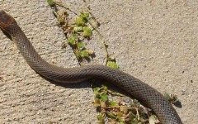Sta per morire e si stappa una bella Bionda Fredda!!! (video) #birra #serpente #morte #morso