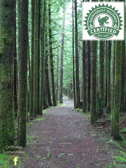 Gracias a la colaboración de RAINFOREST ALLIANCE, nos esforzamos por garantizar que: Todo el papel de nuestros catálogos proviene de bosques administrados responsablemente.