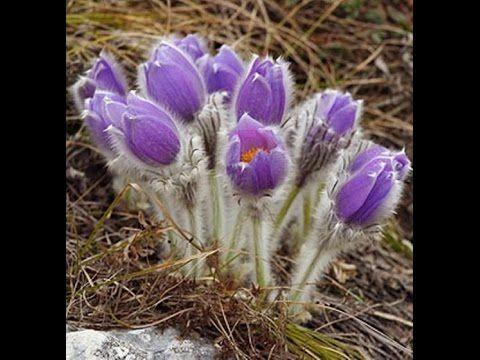 ПОДСНЕЖНИК из фоэмирана! весенние цветы!Своими руками!