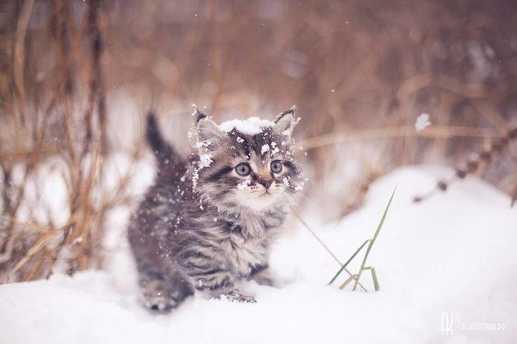 [43+] Animal Winter Wallpaper on WallpaperSafari  |Winter Scenes With Cats