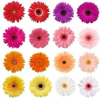 Gerbera's are always pretty and not too expensive either :)
