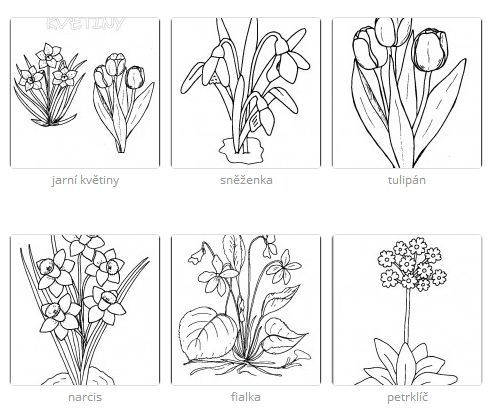 jarn kvety httpwwwpredskolaciczjarni kyticky