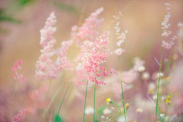 Flowers grass blurred bokeh background vintage