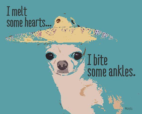 Funny Chihuahua Saying:  Glicee Print  by korpita