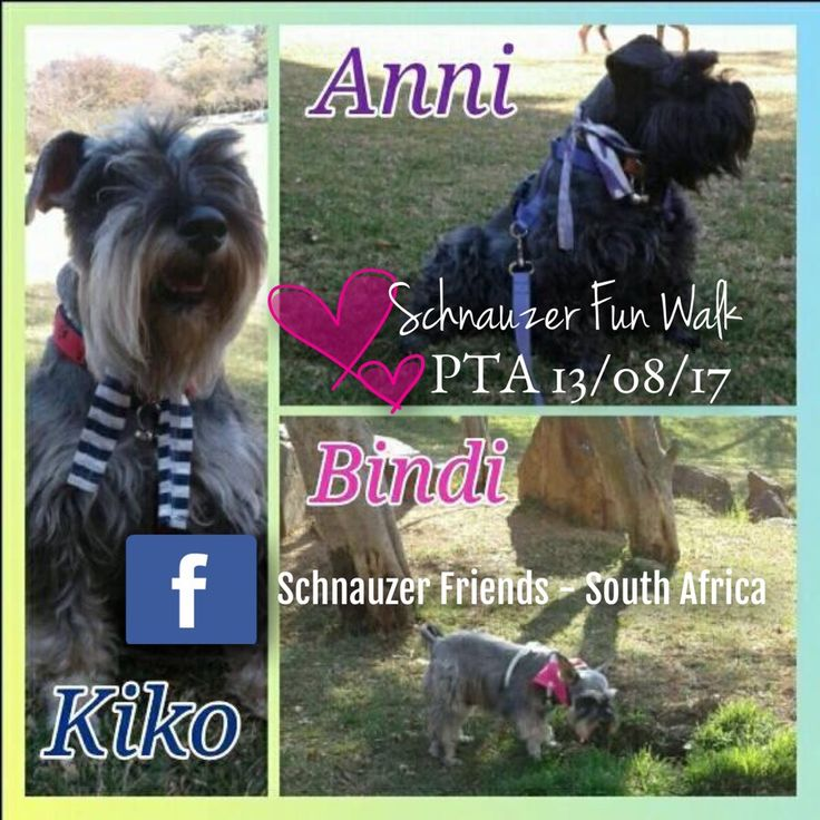 We had loads of fun at the Schnauzer walk in Pretoria this morning! Thank you. — at Waterkloof Ridge Dog Park.