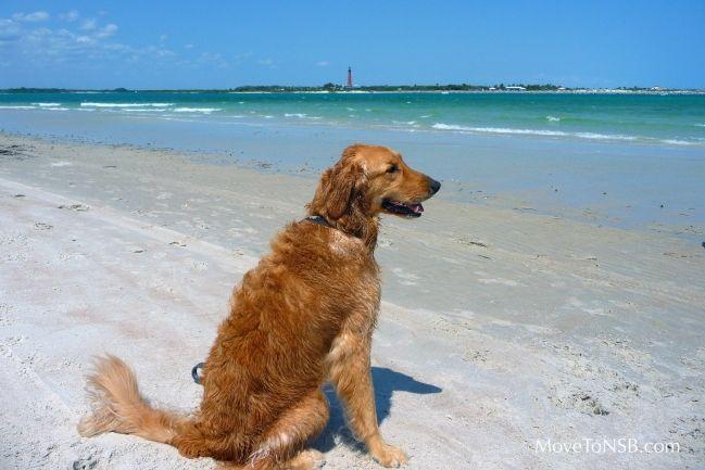 Dog Beach at Smyrna Dunes Park - New Smyrna Beach, Florida - near Atlantic Villas Condos
